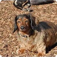 Adopt A Pet :: Jeremy - Ft. Myers, FL