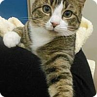 Adopt A Pet :: Ford - Reston, VA