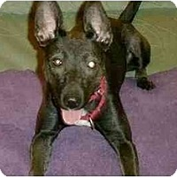 Adopt A Pet :: Justine-URGENT - kennebunkport, ME