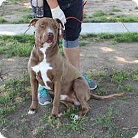 Adopt A Pet :: BREWSTER.URGENT - Sacramento, CA
