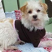 Adopt A Pet :: Ellis - Los Angeles, CA