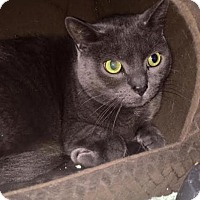 Adopt A Pet :: SMOKEY - Cliffside Park, NJ
