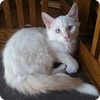 Adopt A Pet :: Boe - North Highlands, CA
