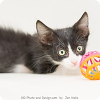 Adopt A Pet :: Chevy - Fountain Hills, AZ