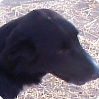 Adopt A Pet :: Ricky (LGD) - Kyle, TX