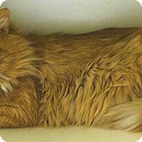 Adopt A Pet :: Leo - Salem, NH