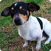 Adopt A Pet :: Nelson - Andalusia, PA
