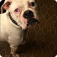 Adopt A Pet :: Fred - Reno, NV