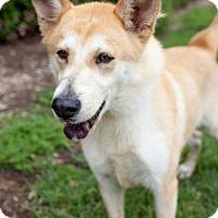 Adopt A Pet :: Leggero - San Diego, CA