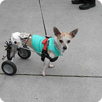 Adopt A Pet :: Romeo - Imperial Beach, CA