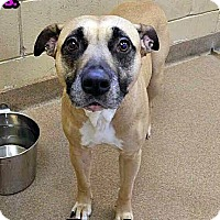 Adopt A Pet :: 1-7 Bridget - Triadelphia, WV