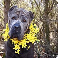 Adopt A Pet :: Jarvis - Davison, MI