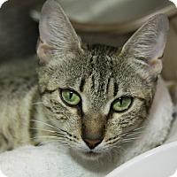 Adopt A Pet :: Penny - Sarasota, FL