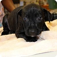 Adopt A Pet :: Edwina - Philadelphia, PA