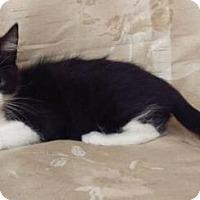Adopt A Pet :: Momo - Fullerton, CA