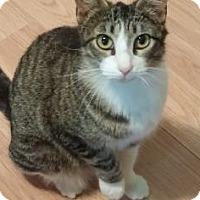 Adopt A Pet :: Kneesox - Bulverde, TX