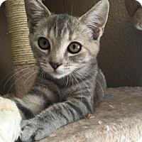 Adopt A Pet :: Julia - Temecula, CA