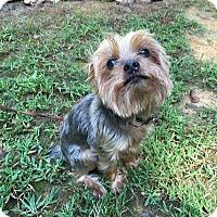 Adopt A Pet :: Reggie - Waxhaw, NC