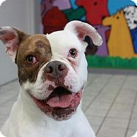 Adopt A Pet :: Lois Lane - Seattle, WA