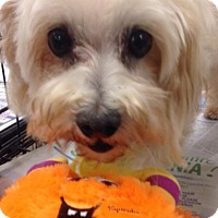 Adopt A Pet :: Darla - Moreno Valley, CA