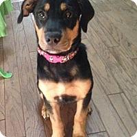 Adopt A Pet :: JoJo - Grafton, WI