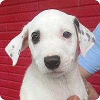 Adopt A Pet :: Eastman - Reeds Spring, MO