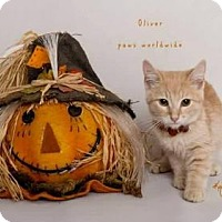 Adopt A Pet :: OLIVER - Yucca Valley, CA
