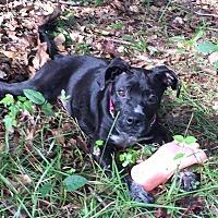 Adopt A Pet :: Exodus - Vidor, TX