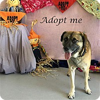 Adopt A Pet :: Plymouth - Concord, NC