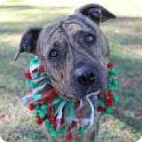 Adopt A Pet :: Daisy - Jesup, GA