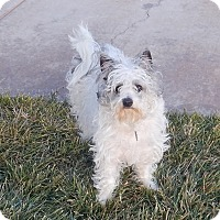 Adopt A Pet :: Willow - Apple Valley, UT