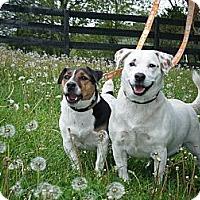 Adopt A Pet :: Reggie - Rhinebeck, NY