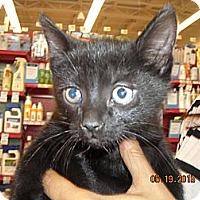 Adopt A Pet :: Lucine - Riverside, RI