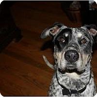 Adopt A Pet :: DUNCAN - Malibu, CA