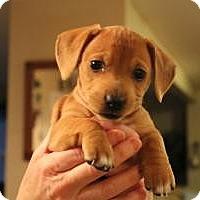 Adopt A Pet :: Chloe - Marlton, NJ
