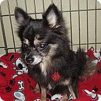 Adopt A Pet :: SALEM - Loxahatchee, FL