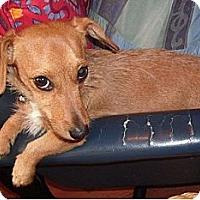Adopt A Pet :: Tara - Hamilton, ON