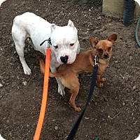 Adopt A Pet :: Max and Red - Tracy, CA