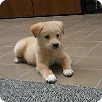 Adopt A Pet :: Maxwell - Minneapolis, MN