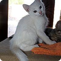 Adopt A Pet :: Merridoc - Phoenix, AZ