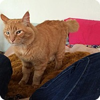 Adopt A Pet :: Big Red - Arcata, CA
