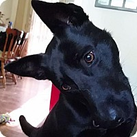 Adopt A Pet :: Jett - Kansas City, MO
