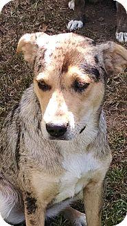 Dog Training Silverdale Wa