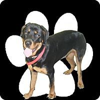 Adopt A Pet :: Tucker - Huxley, IA