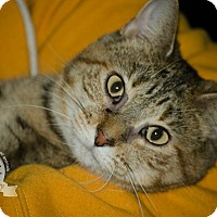 Adopt A Pet :: Jenny - Middletown, OH