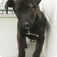 Adopt A Pet :: Freska - Homer, NY