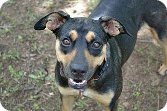German Shepherd Dog Mix Dog for adoption in oklahoma city, Oklahoma - Sadie