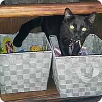 Adopt A Pet :: Danny Boy - Goldsboro, NC