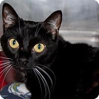 Adopt A Pet :: Pepper - Bradenton, FL