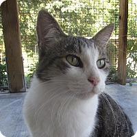 Adopt A Pet :: KOEKIE - Jackson, MO